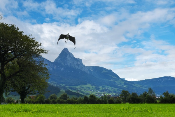 landscape with mountains and flying bird