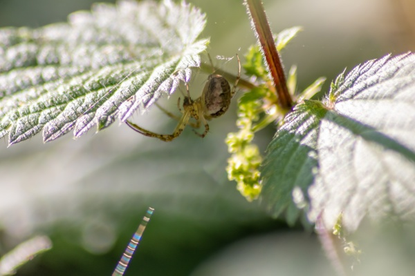 little spider on green plant leaf