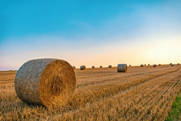 straw bales stacked in a field