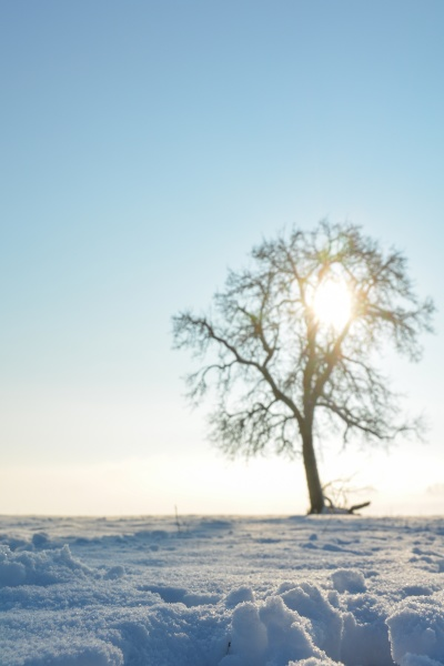 snow with blurred tree sun and