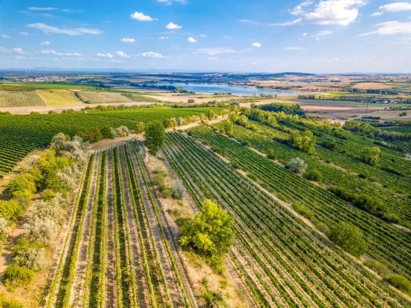 vineyards in palava czech republic