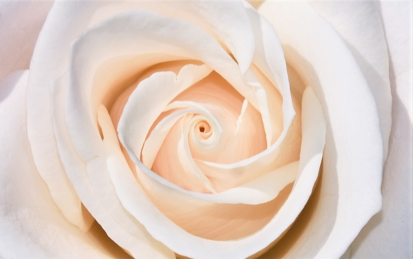 close up of a beautiful white