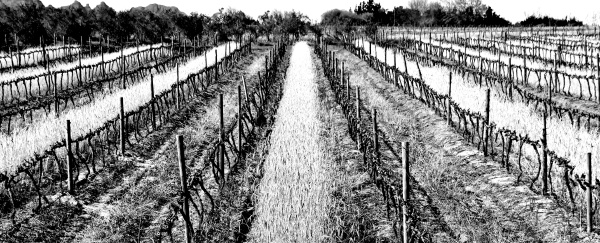 landscape with a bare vineyard in