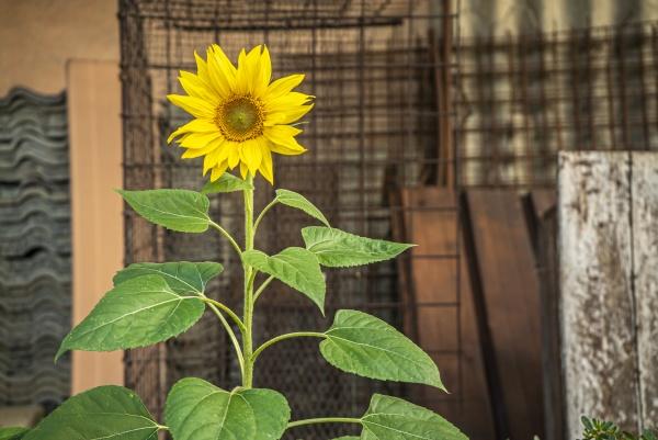 flower grows abandoned urban environment 3