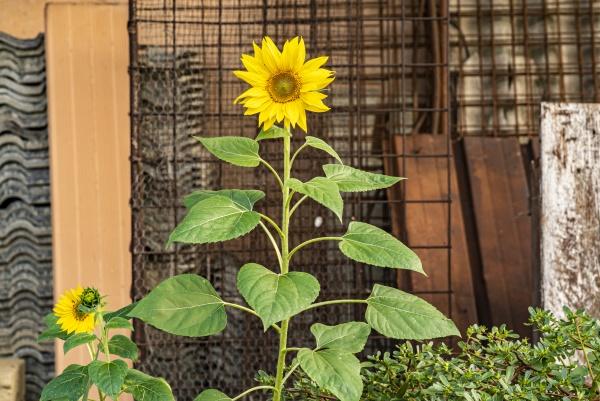 flower grows abandoned urban environment 8