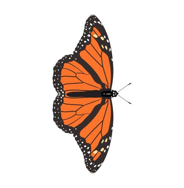 danaus plexippus monarch butterfly