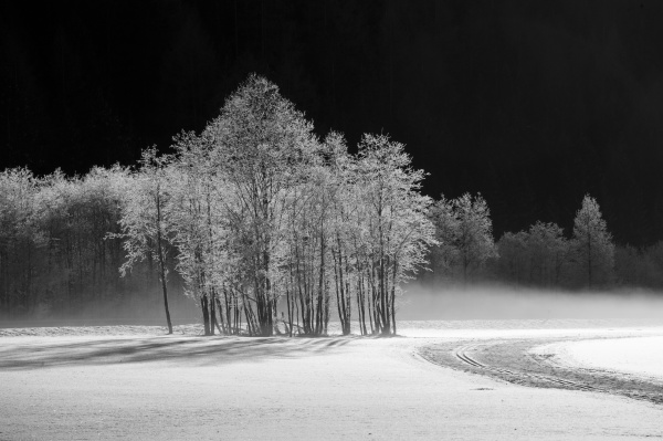 frosted, trees - 30765218