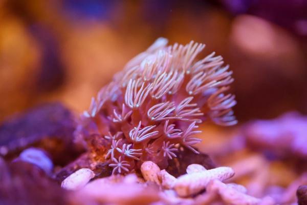a coral in the saltwater aquarium