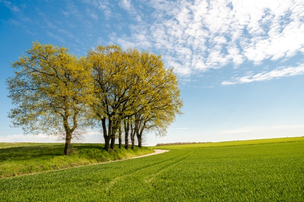 green tree and green grass on