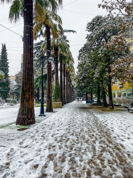 city streets in the winter palm