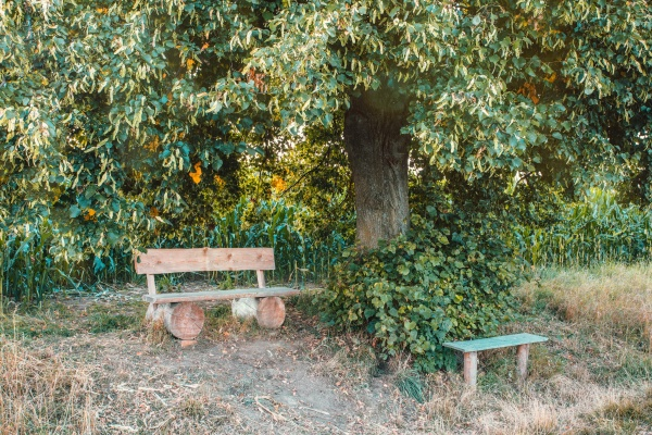 small wooden bench resting place under