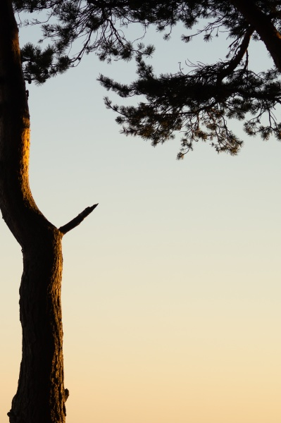 sunset in the forest tree in