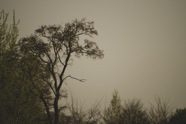dry trees in gloomy day in