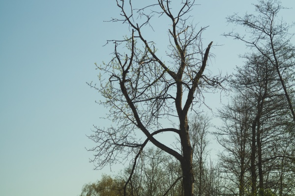 old dry tree in the forest