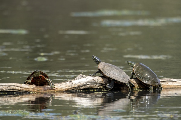 two turtles watching the other climb