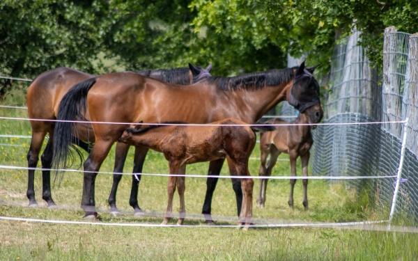a herd of beberbeck horses equus