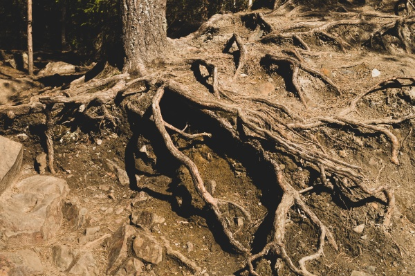root tree in forest wooden background