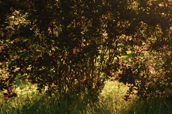 sunlight through tree foliage shiny leaves