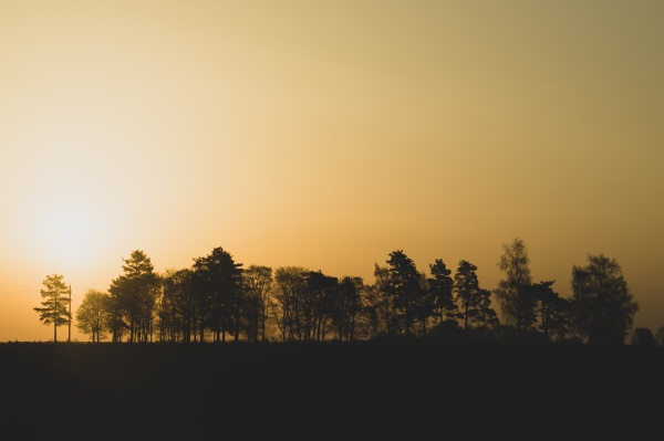 silhouette of the trees at sunset