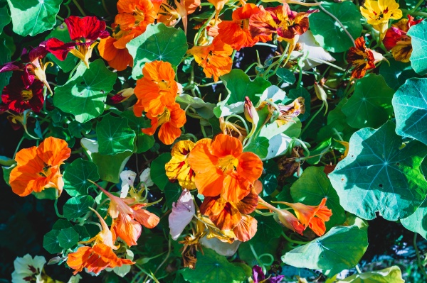 colorful flowers in the garden close