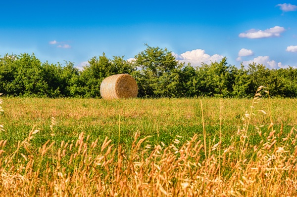 hay bales on the field after