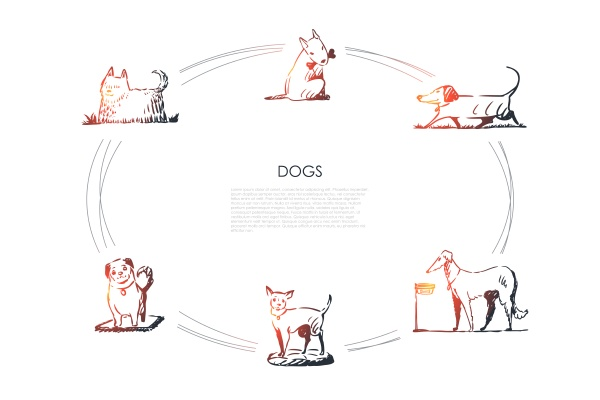 dogs different dog breeds walking