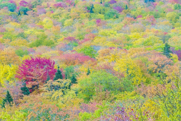 beautiful forest in indian summer colors