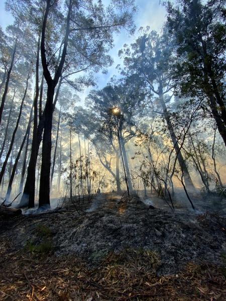 bushfire mitigation burn