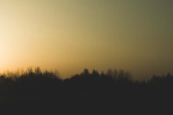 silhouette of forest at sunset