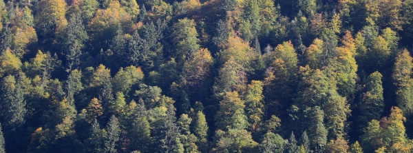 golden tree tops in a mixed