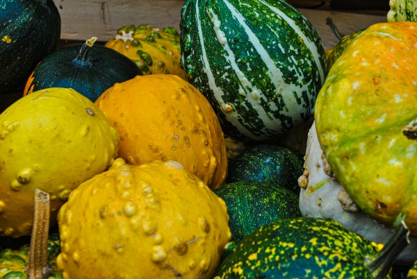 a variety of pumpkins in a