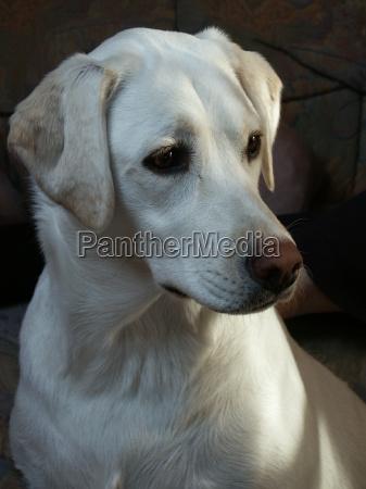 animals pets blank european caucasian dog