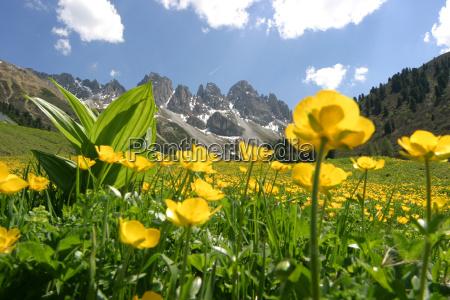 montanyas alpes caminata austria flor flores