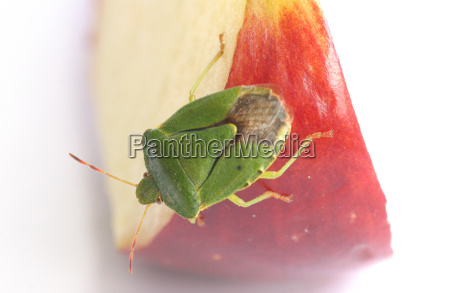 insecto verde los animales escarabajo error