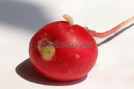 comida los animales vegetal semiluxury alimentos