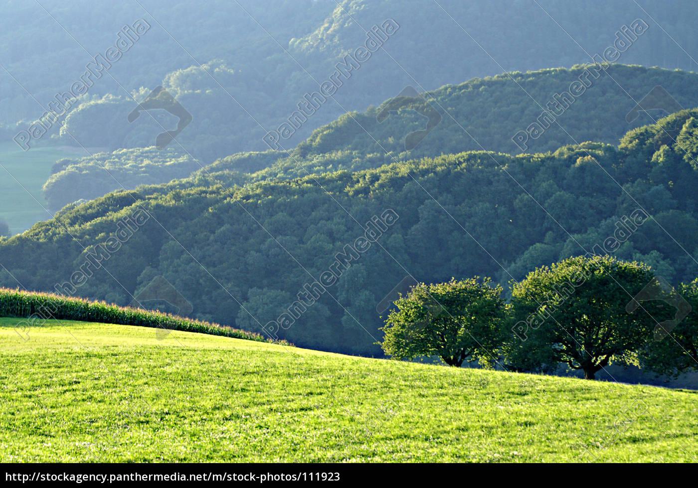 evening, green - 111923
