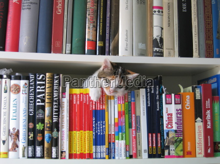 expedition on the bookshelf