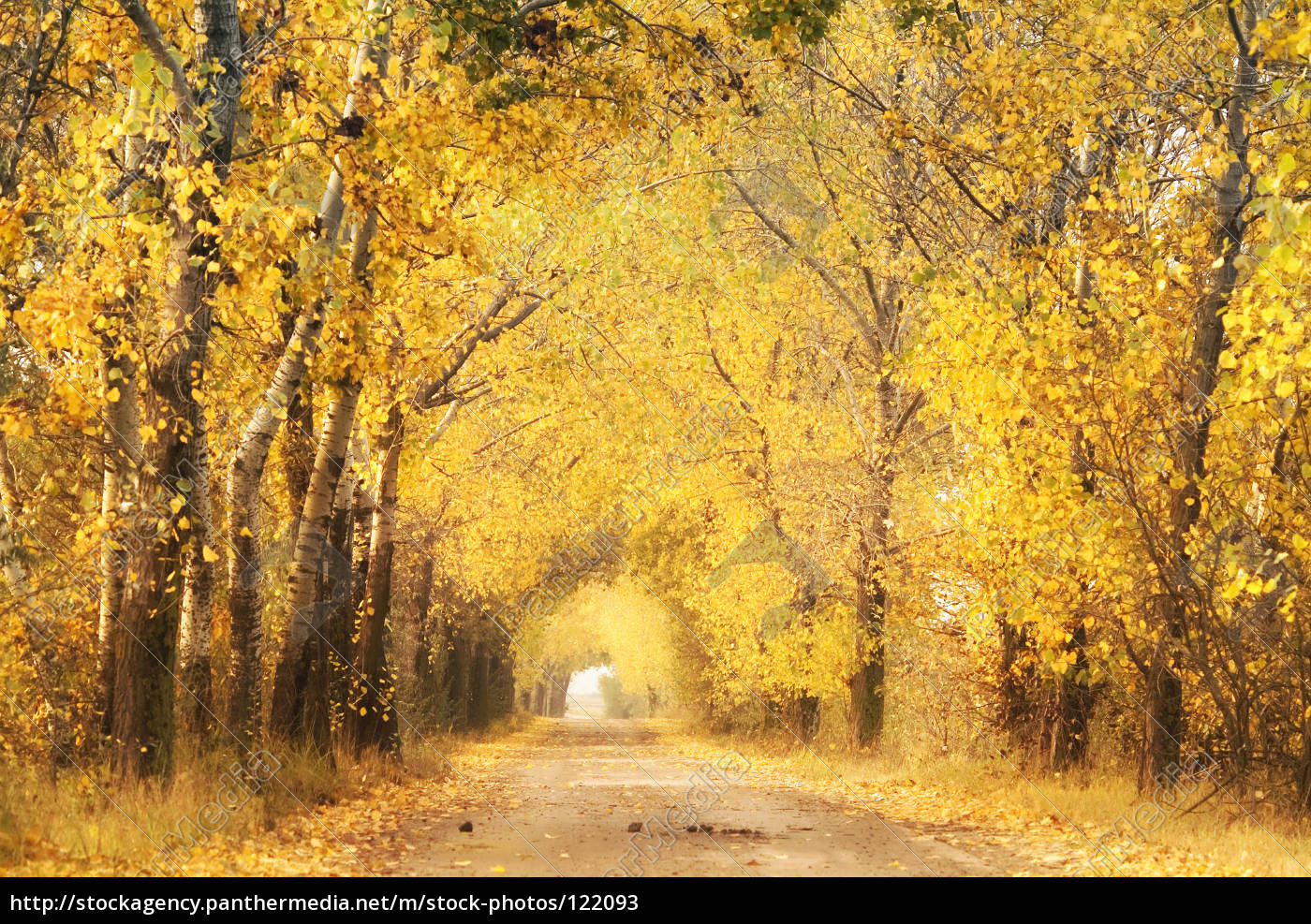 tree, alley, in, autumn - 122093