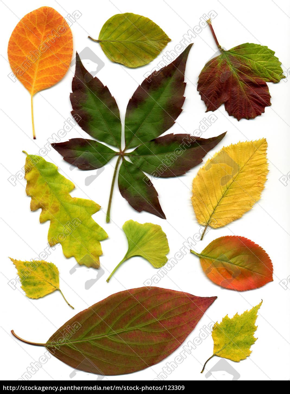 autumn, leaves, 3 - 123309