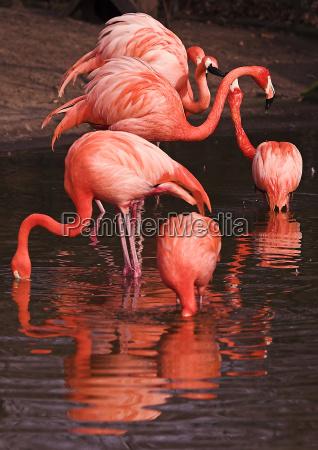 flames, -, flamingos - 137426