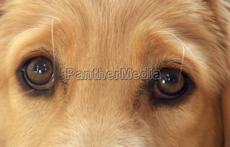 dog, eye - 146561