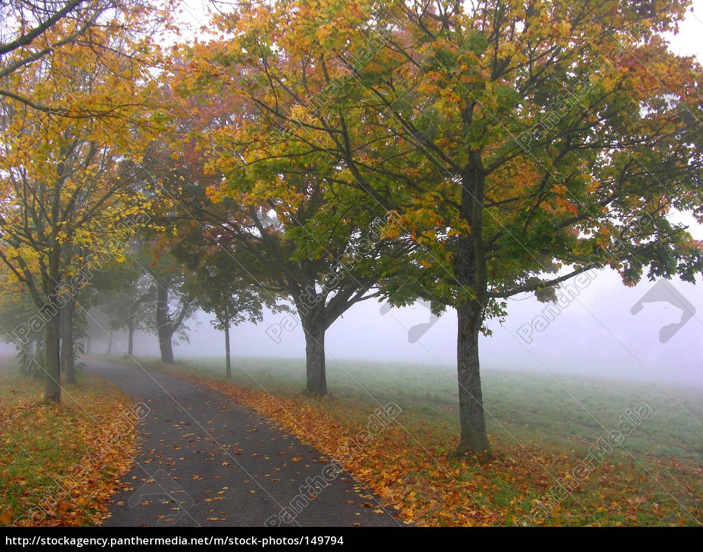 walk - 149794