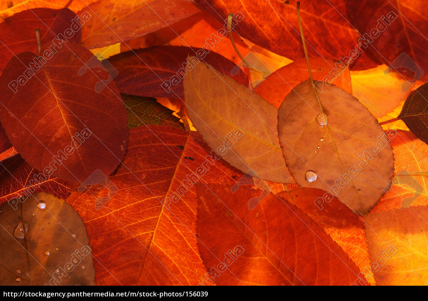 autumn, fireworks - 156039
