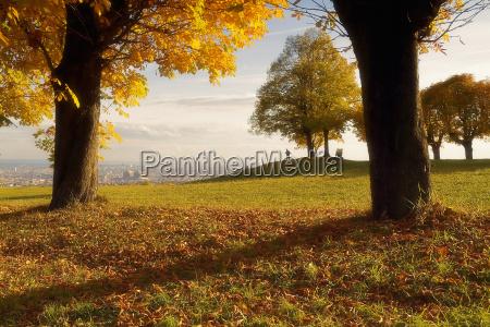 view, of, vienna - 157043