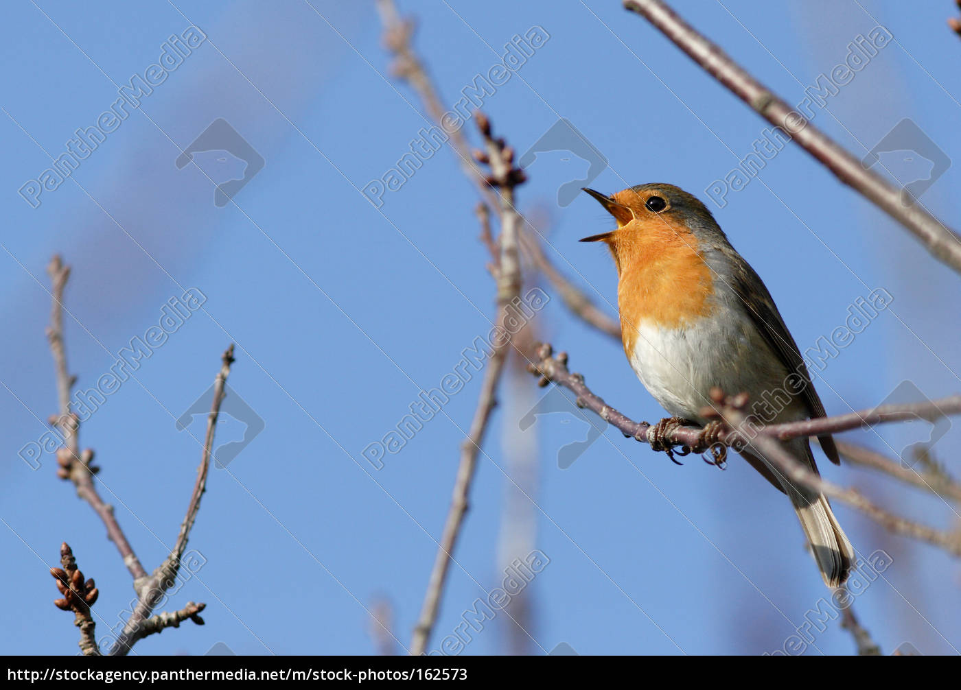 in, singing, ... - 162573
