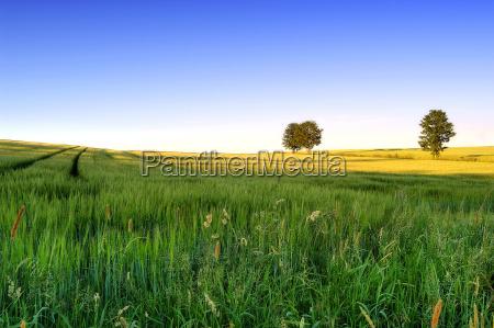 landscape, 4 - 162292