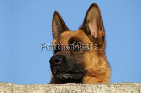 warning, of, the, dog - 163533