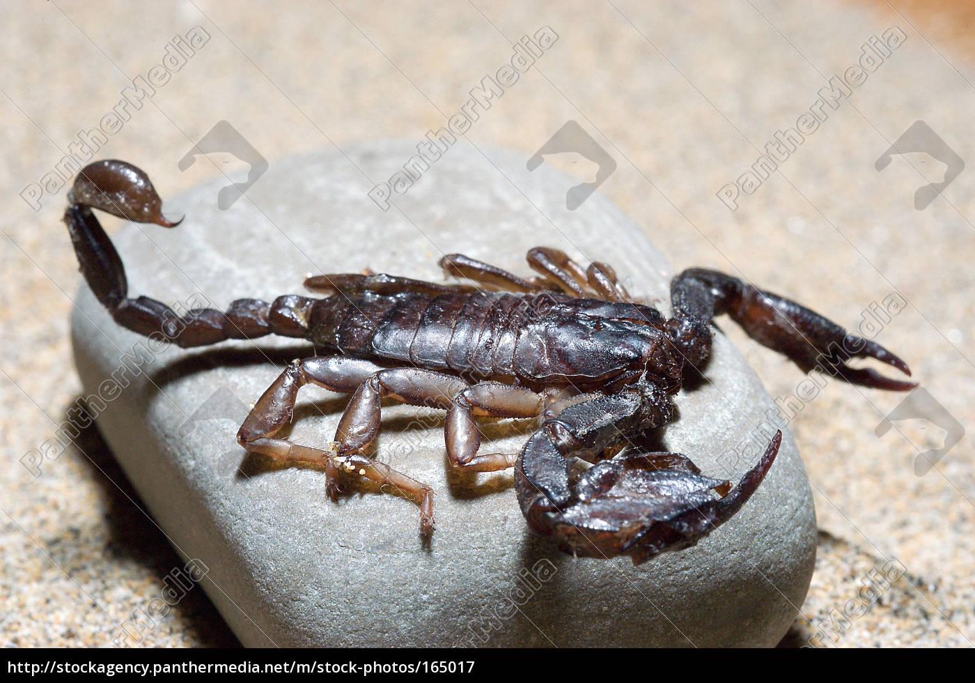 scorpio, 3 - 165017
