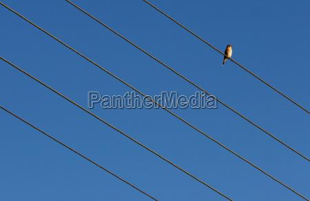a diagonal bird