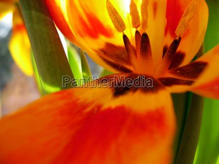 orange macro close up macro admission